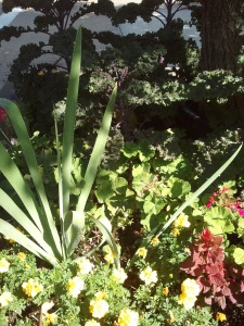 Main Street  Downtown Bountiful, Utah Kale along with ornamental plants